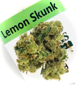 lemon skunk by sunmed growers