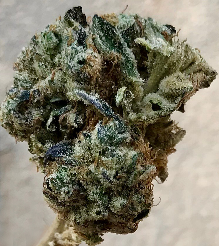 Blackberry by gLeaf. This is a photograph of the strain Blackberry by gLeaf