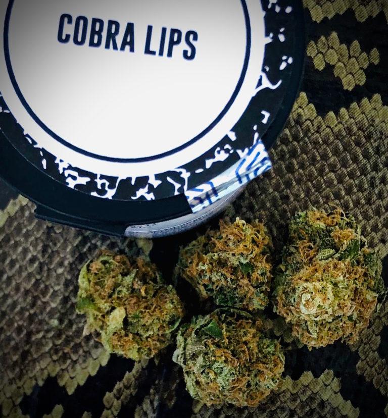 Cobra Lips strain by Culta
