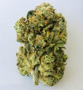 a bushy green crusty trichome and bronze pistil colored bud of the strain Carolina by Curio standing upright
