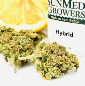 bright green buds of lemon skunk with sunmed growers container displaying the words hybrid