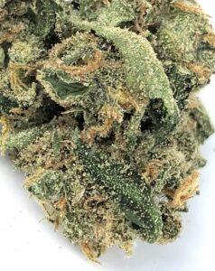 detail macro of the top portion of a lemon skunk cannabis bud