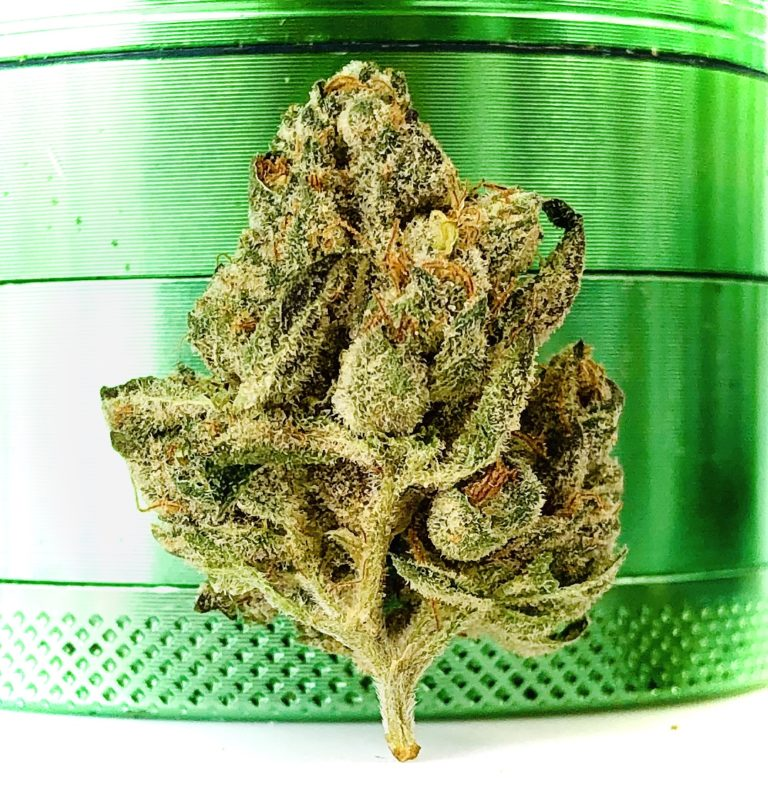 bud of yuck mouth close up