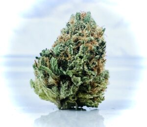 leaning conical bud of airborne skunk evermore cannabis