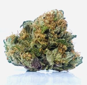 savage purple bud displaying a brilliant color scheme with bright green and purple sugar leaves, robust rust colored pistils/stigma/
