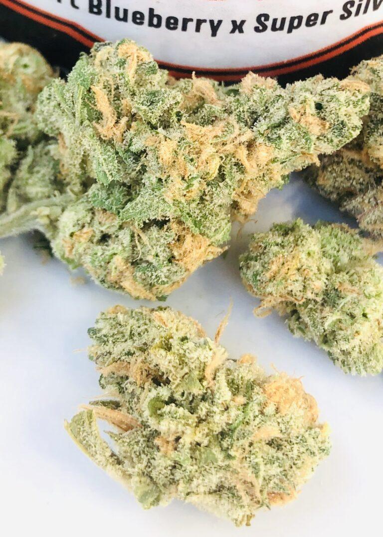 close up of santa cruz blue dream evermore