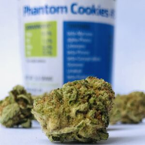 closeup of phantom cookies bud with forwardgro container blurred in the background