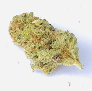 diagonally postione bud of light green phantom cookies with rusty red hairs and hints of light purple on bottom