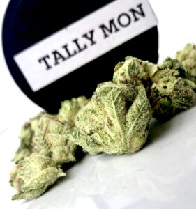 tally mon batch 1 buds