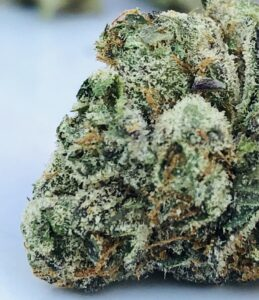 brilliant white trichomes and orange hairs against green g purps bud