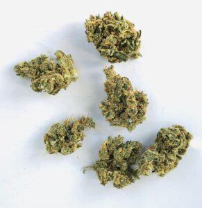 buds of lemon skunk strain