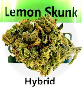 oblong shaped lemon skunk bud