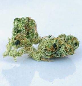 buds of mk ultra by curio