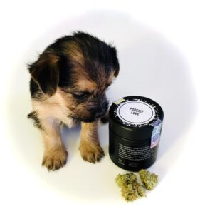 puppy with poochie love by culta's new glass container and buds
