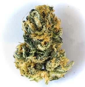 solitary bud of poochie love strain by culta