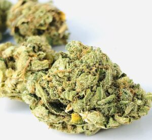 yellow and green stardawg bud resembles diesel strains